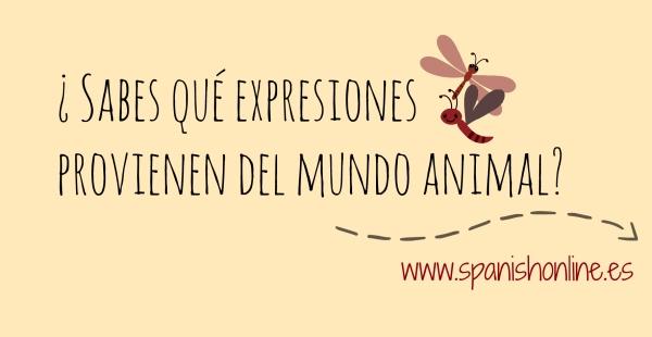 ¿Sabes qué expresiones provienen de mundo animal?
